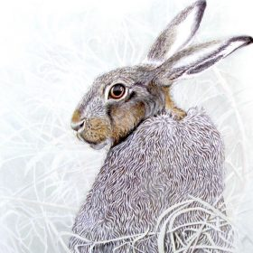 I Spied a Hare